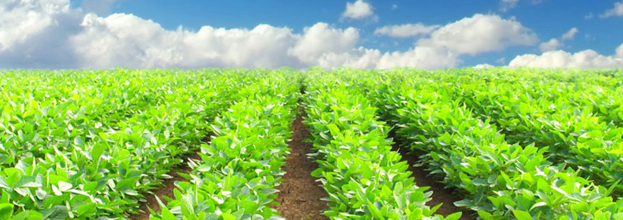 Zeta Trading Corporation, Agrochemicals and Fertilizers